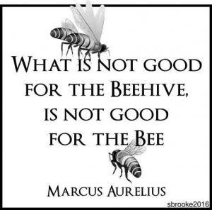 Best 25 Marcus Aurelius Quotes Ideas Only